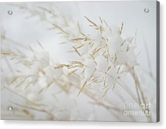 Seeds Of Winter Acrylic Print