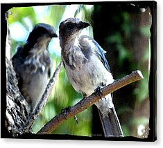 Seeing Double Acrylic Print by Ellen Lerner ODonnell