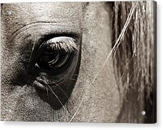 Stillness In The Eye Of A Horse Acrylic Print by Marilyn Hunt