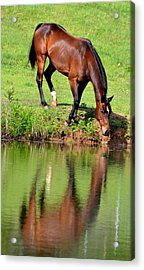 Seeing My Own Reflection Acrylic Print
