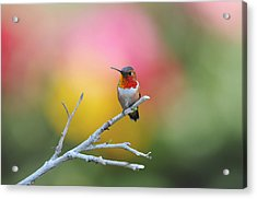 Seeing Red Acrylic Print by Lynn Bauer