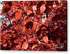 Seeing Red Acrylic Print