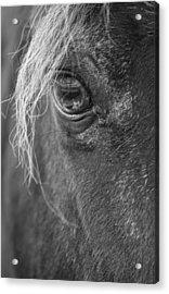 Seen Thru The Eye Acrylic Print by Karol Livote