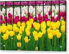 Segregated Spring Acrylic Print