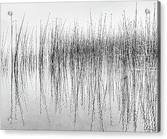 Seismograph Acrylic Print