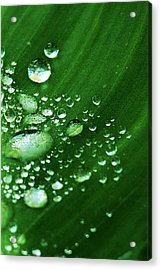 Growing Carefully Acrylic Print