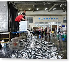 Selling Grey Mullet Fish In Taiwan Acrylic Print