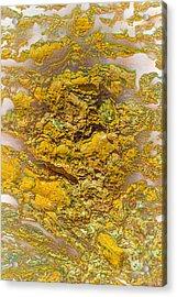 Semi Translucent Bark Abstract Acrylic Print