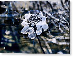 Send You Some Feeling Of Blue Acrylic Print by Nicole Frischlich