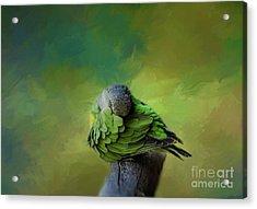 Senegal Parrot Acrylic Print