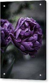 Sensational Dreams Acrylic Print by Miguel Winterpacht