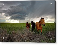 Sensing The Storm #3 Acrylic Print