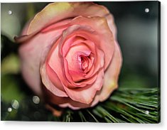 Acrylic Print featuring the photograph Sentimentality by Diana Mary Sharpton