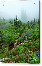 Sentinels In The Mist Acrylic Print by Mike Dawson