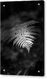Separated Acrylic Print