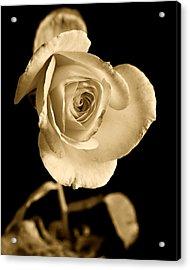 Sepia Antique Rose Acrylic Print
