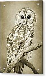 Sepia Owl Acrylic Print