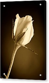 Sepia Rose Bud Acrylic Print by M K  Miller