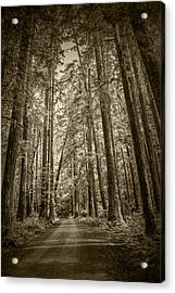 Sepia Tone Of A Rain Forest Dirt Road Acrylic Print