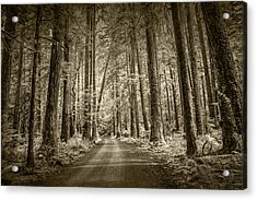 Sepia Tone Of A Road In A Rain Forest Acrylic Print