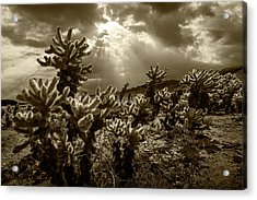 Acrylic Print featuring the photograph Sepia Tone Of Cholla Cactus Garden Bathed In Sunlight by Randall Nyhof
