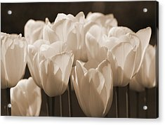 Sepia Tulips Acrylic Print by Karla DeCamp