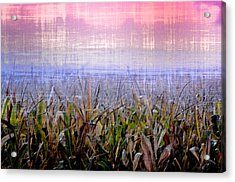 September Cornfield Acrylic Print by Bill Cannon