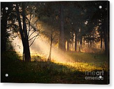 Acrylic Print featuring the painting September Impressions by Rosario Piazza