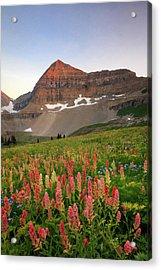 September Wildflowers Acrylic Print