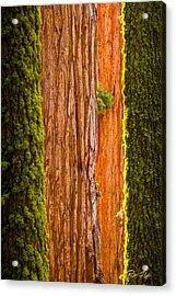 Sequoia Abstract Acrylic Print