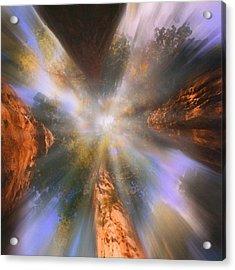 Sequoia Acrylic Print by Robby Donaghey