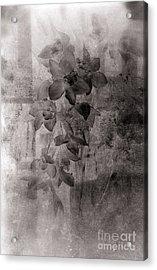 Serenade Acrylic Print