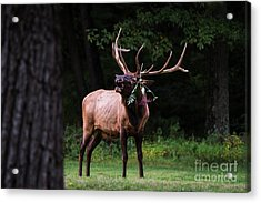 Acrylic Print featuring the photograph Serenading by Andrea Silies
