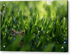 Acrylic Print featuring the photograph Serendipity by Laura Fasulo