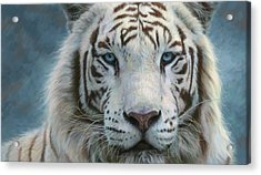 Serene Emperor Acrylic Print by Lucie Bilodeau