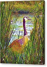 Serene Goose Dreams Acrylic Print