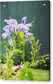 Serene Purple Acrylic Print