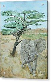 Serengeti Elephant Acrylic Print by Yvonne Johnstone