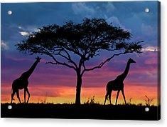 Serengeti Sunset Acrylic Print by Stu  Porter