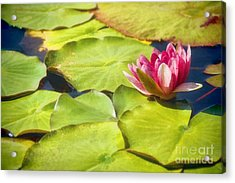 Serenity And Solitude Acrylic Print by Peggy Hughes