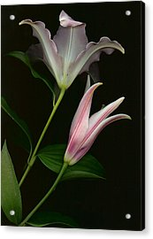 Acrylic Print featuring the photograph Serenity by Carol Kinkead