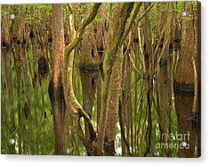 Serenity In The Cypress Acrylic Print by Adam Jewell