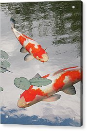 Acrylic Print featuring the photograph Serenity - Red And White Koi by Gill Billington