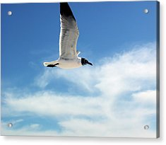 Serenity Seagull Acrylic Print by Marie Hicks