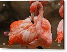 Serious Flamingo Acrylic Print by Teresa Blanton