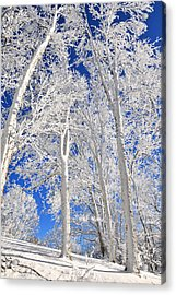 Serious Rime Frost Acrylic Print by Alan Lenk