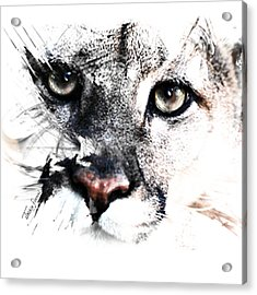 Seriously Cougar Acrylic Print