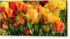 Acrylic Print featuring the photograph Seriously Spring by Wendy Wilton