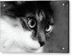 Seriously You Have Issues Black And White Cat Art Acrylic Print by Georgiana Romanovna