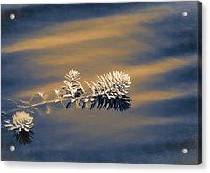Set Apart Acrylic Print by Carolyn Marshall